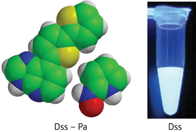 New, unnatural base pairs called Dss–Pa (left) can be specifically incorporated into DNA and RNA molecules while retaining bright fluorescent emissions (right)