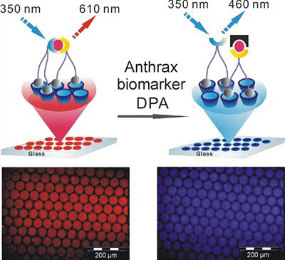 A novel surface-assisted fluorescent sensing system is developed for the ratiometric detection of the anthrax biomarker dipicolinic acid on a molecular printboard