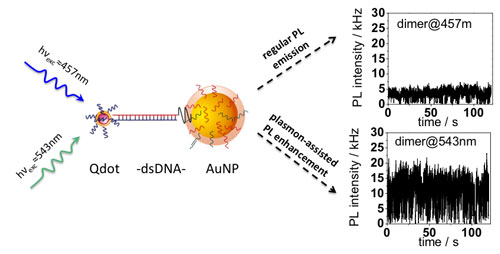Photoluminescence enhancement is demonstrated at the single molecule level for two-particle systems composed of a quantum dot (Qdot) and gold nanoparticle (AuNP) linked by double stranded DNA (dsDNA) when optically excited with wavelengths within the surface plasmon resonance range of the gold nanoparticle