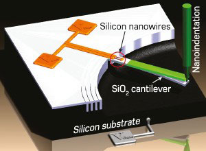 Schematic diagram of piezoresistive silicon nanowires embedded into the base of a large cantilever