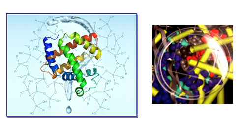 Schematic, fabrication, and structure of the membrane based electrode for active electrical bacteria killing