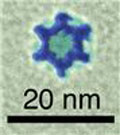 Star-shaped nanocages