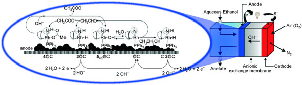 The intact deposition of a complex into carbon powder allows the construction of an organometallic fuel cell (OMFC) that efficiently converts alcohols into carboxylic acids