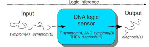 biological sensor detects and analyses DNA sequences