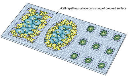 Cells can be corralled on a chip in different ways by etching grooves into its surface