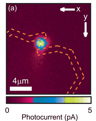 This image shows the photocurrent from the nanowire detector (the yellow spot represents the region where current is generated under illumination) and the electrical contacts are indicated in blue, while the nanowire is indicated in green
