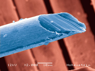 SEM image of a textile fibre to which silver nanoparticles have been applied to increase its UV protection factor