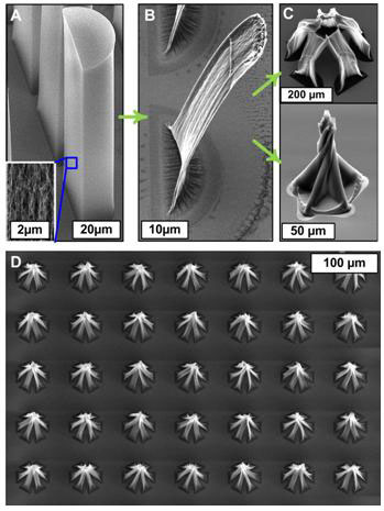 SEM image of carbon nanotube forests before (A) and after (B) capillary forming