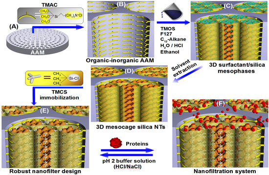 Robust, simple synthesis process for nanofilter AAM membranes in 3D mosaic cage silica nanotubes for molecular orientation and size cut-off of proteins
