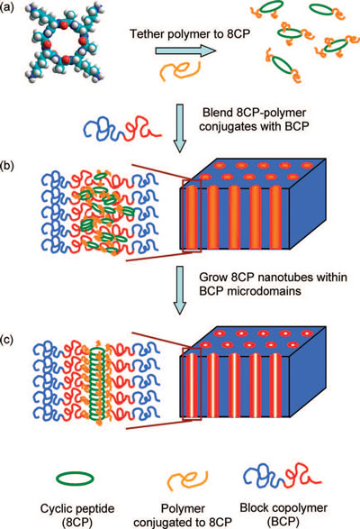 process by which a polymer is tethered to cyclic peptides (8CP)then blended with block copolymers (BCPs) to make a membrane aligned with subnanometer channels in the form of organic nanotubes