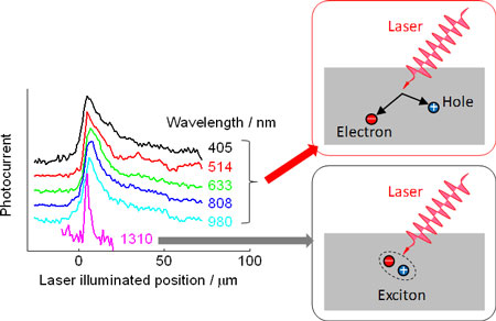 Diffusion lengths at different wavelengths of excitation light