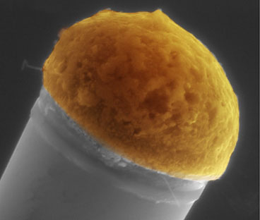 Molten droplets of copper, at top, dissolve silicon out of a surrounding silicon-rich gas, and then the silicon precipitates out at the bottom of the drop to gradually build up a silicon microwire