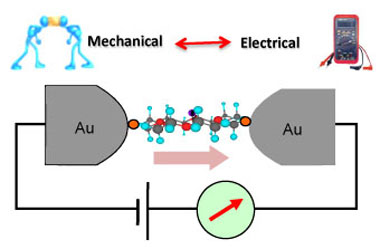 When electrical devices are shrunk to a molecular scale, both electrical and mechanical properties of a given molecule become critical. Specific properties may be exploited, depending on the needs of the application. Here, a single molecule is attached at either end to a pair of gold electrodes, forming an electrical circuit, whose current can be measured