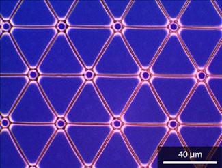 Optical microscopy image of a fully connected hexagonal network of microwires prepared by the self-assembly of gold nanoparticles on a photoresist template
