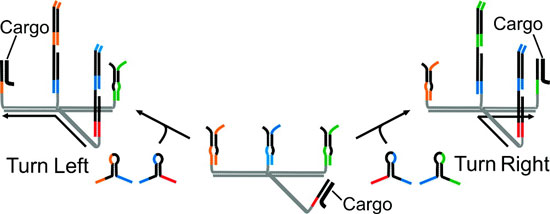 Illustration shows a programmable molecular robot — a sub-microscopic machine made of synthetic DNA that can move among different branches of a molecular track while carrying cargo