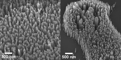 carbon nanofibers grown from nickel nanoparticle catalysts