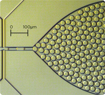 30µm diameter oil-in-water droplets Connector 4-way and Top Interface generated with the Small Droplet Chip