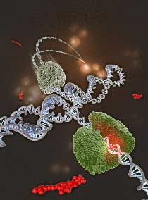 Tracking the influence of a cancer inhibitor on a single DNA molecule