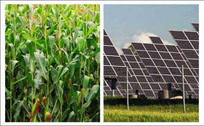 Photosynthesis or photovoltaics? Which is more efficient at harvesting the sun's energy, plants or solar cells?