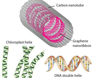 Schematic illustrations of the nanotube–nanoribbon structure (top) and comparable helical structures in nature