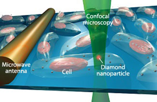 Fluorescence imaging of nanodiamonds in a living human cell