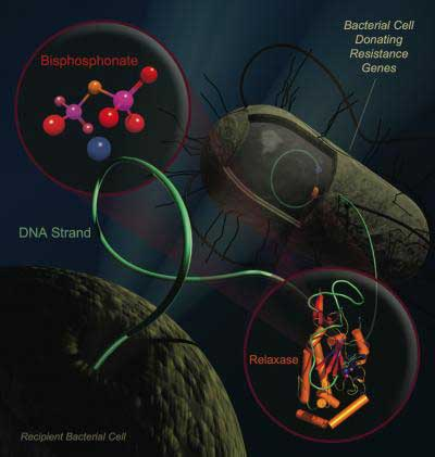 Antibiotic resistance propagates in bacteria by moving DNA strands