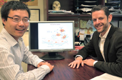 Weian Zhao (left) and Jeffrey Karp sit beside a graphic demonstrating their novel platform technology for monitoring single-cell interactions in real time
