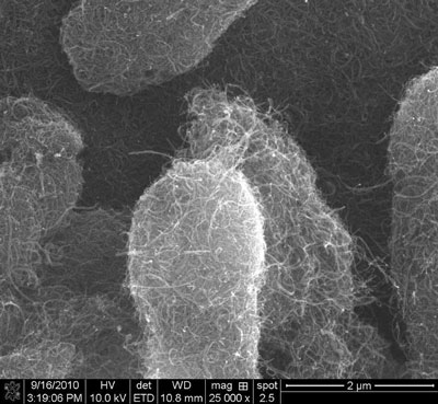 carbon nanotubes, seen by scanning electron microscopy