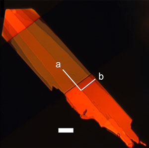 A single crystal of a organic semiconductor material