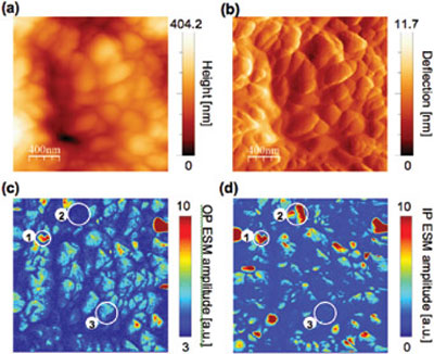 the correlation between topography and the measured out-of-plane and in-plane Electrochemical Strain Microscopy amplitude and phase signals