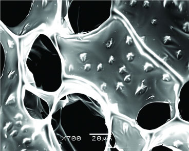 A scanning electron microscope image of nanowire-alginate composite scaffolds