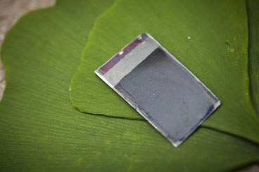 The artificial leaf, a device that can harness sunlight to split water into hydrogen and oxygen without needing any external connections, is seen with some real leaves