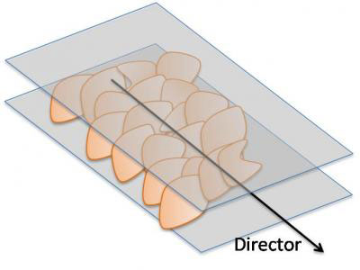 Graphene oxide flakes in a solution align themselves with a director