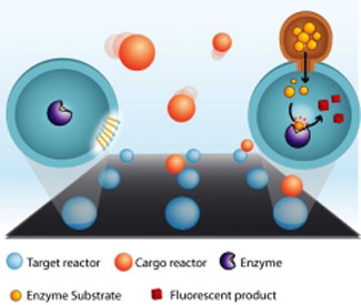 ultra small nanoreactors have walls made of lipids