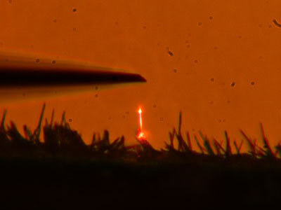 Optically pumped GaN nanowire laser shown glowing orange
