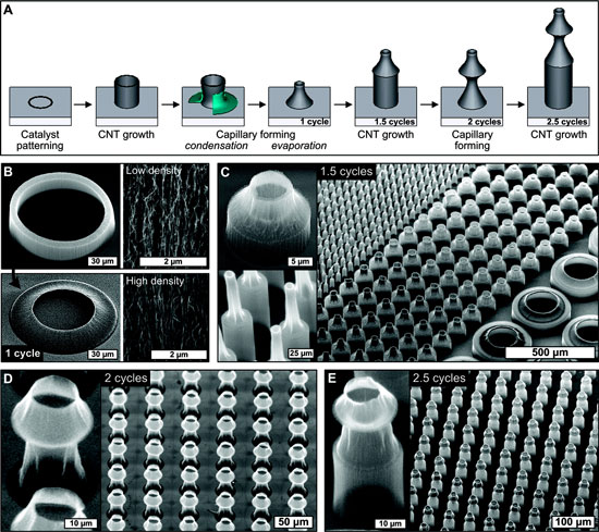 Fabrication of cylindrical carbon nanotube microbellows by iteration of growth and capillary forming