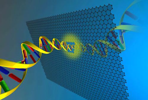a long DNA molecule can be pulled through a graphene nanopore