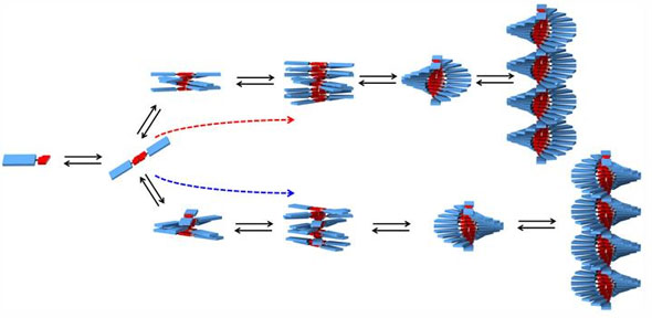 A diagram showing the formation of helical SOPV polymer chains.