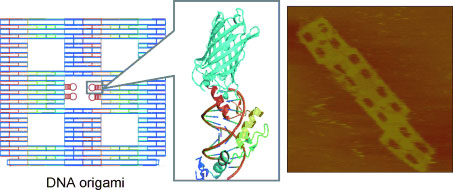 Zinc-finger proteins act as site-specific adapters for DNA-origami structures