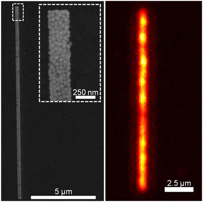 a 15-micron line of 50-nanometer spherical gold nanoparticles