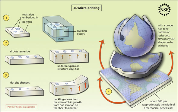 Researchers 'Print' Polymers That Bend Into 3-D Shapes