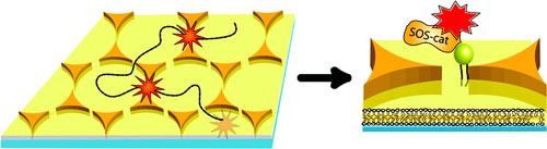 Gold triangle nanoparticles paired tip-to-tip in a bow-tie formation, serve as optical antennas
