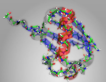 LundIn this structural diagram of the protein ubiquitin, alpha helices are highlighted in red and beta sheets highlighted in blue