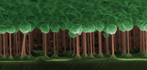 The dark forest of GaAs/GaInP nanowires