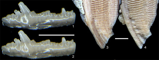 Optical micrographs before gold coating and after removal of same