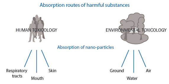 Absorption routes of harmful substances