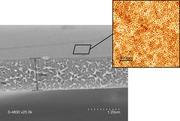 Scanning electron microscopy image of the membrane with an atomic force microscopy enhancement of the surface
