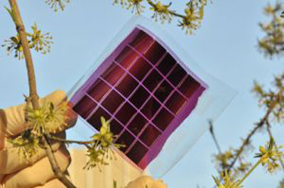 Flexible organic solar module on a plastic foil