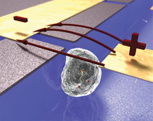 A microfluidic device applying an electric pulse to a single cell