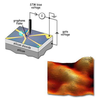 A phonon floodgate in monolayer carbon